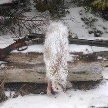 Thumb sterlingworth fox rabbit